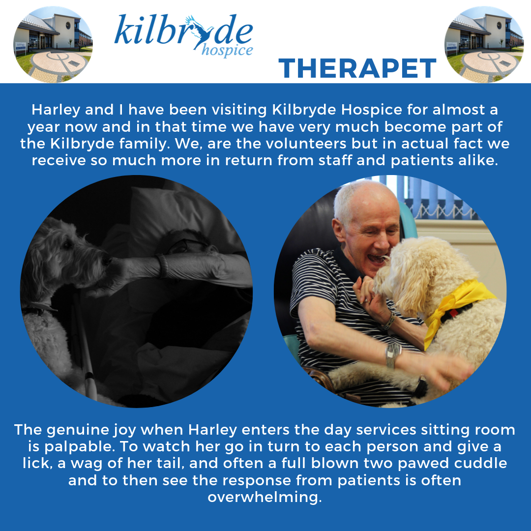 Hospice Care Week – Harley the therapet
